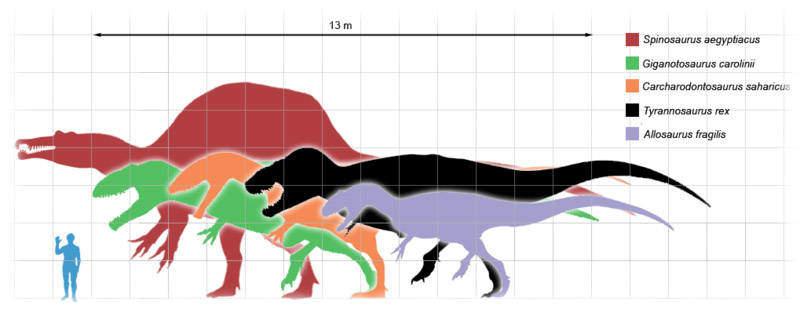 Крупнейшие динозавры-хищники все о цератозавре