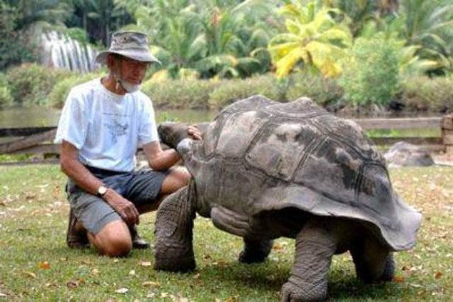 Сейшельская черепаха