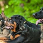 Самые смелые породы собак