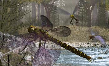 Древняя стрекоза