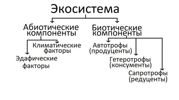 Структура экосистемы