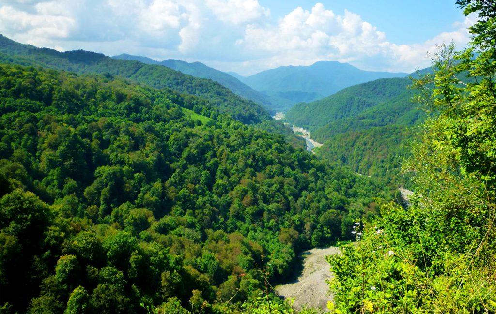 Субтропические леса в Сочи