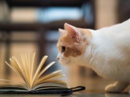 Самые умные кошки в мире