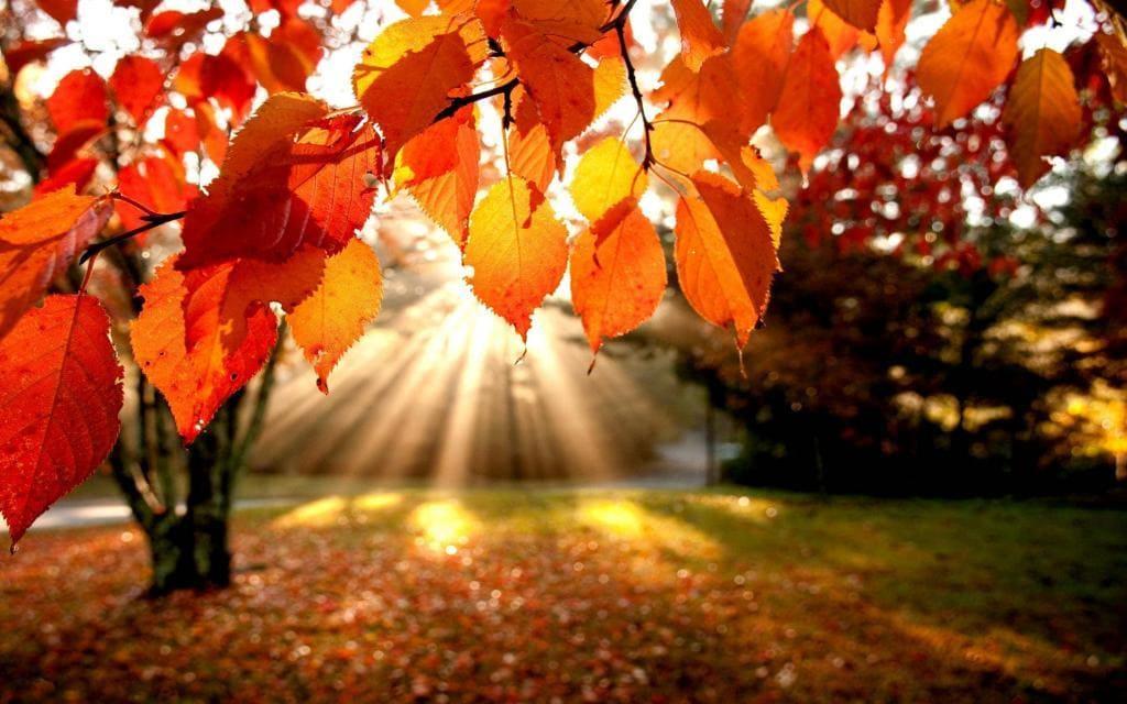 Листья ощущают сокращение продолжительности светового дня