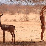Самые высокие животные в мире