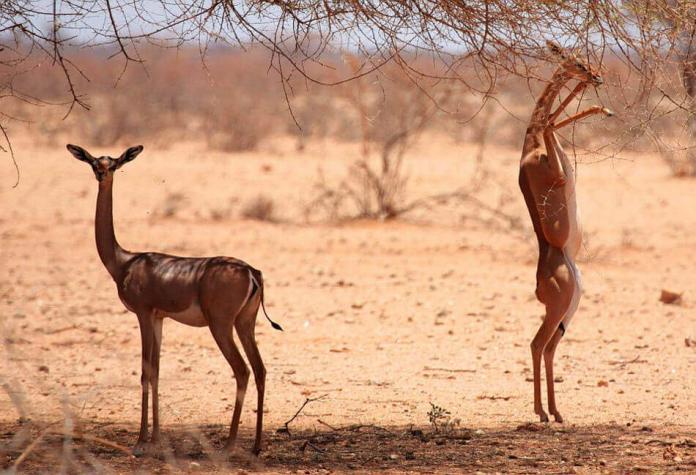 Животные хотят быть высокими