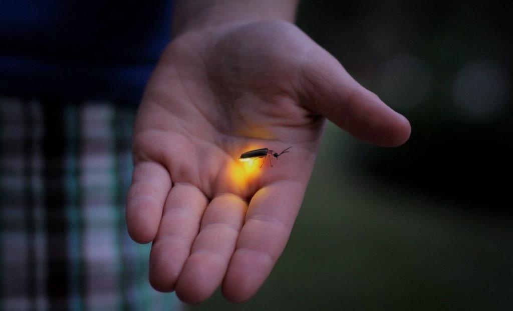 Наглядный пример яркости светлячка на ладони человека
