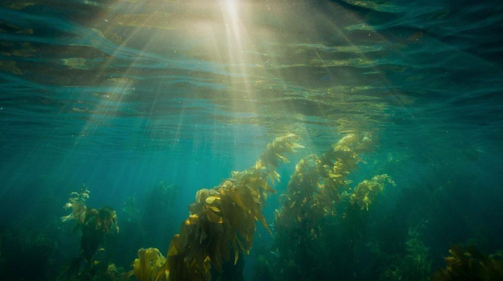 Под водой скорость света снижается на 25%