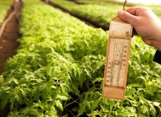 Есть ли у растений температура «тела»?