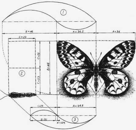 Тригонометрическое вычисление размера крыльев бабочек