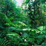 Тропический лес: флора и фауна