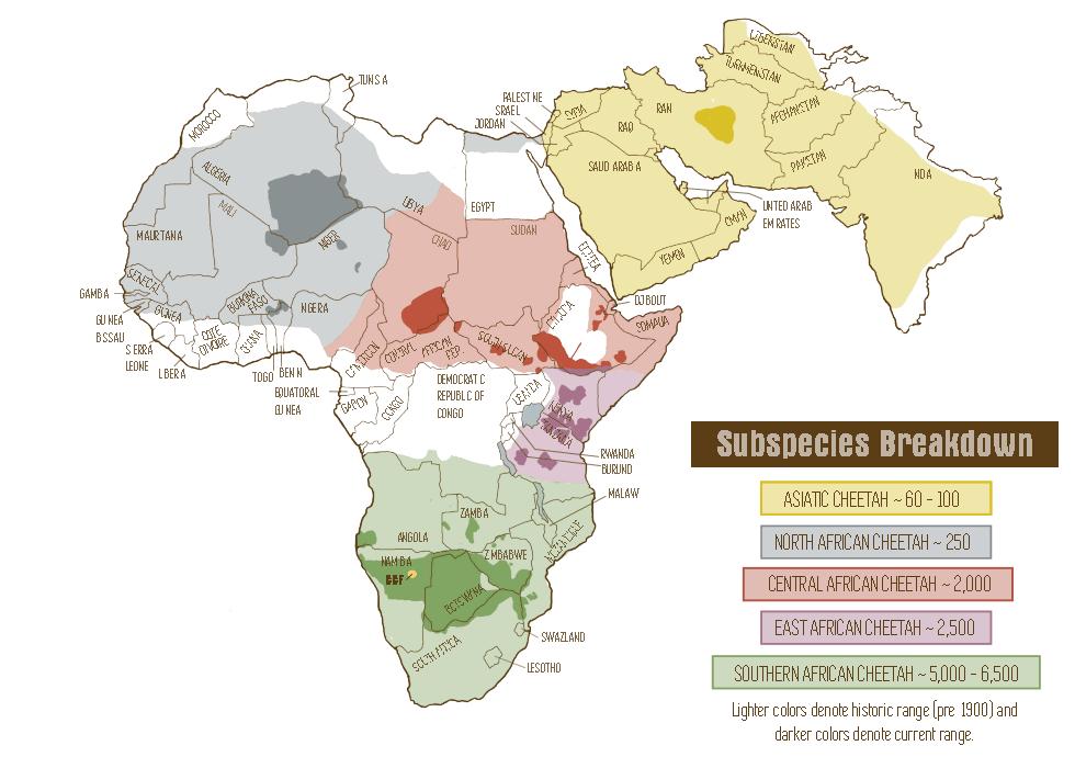 Ареал обитания гепардов