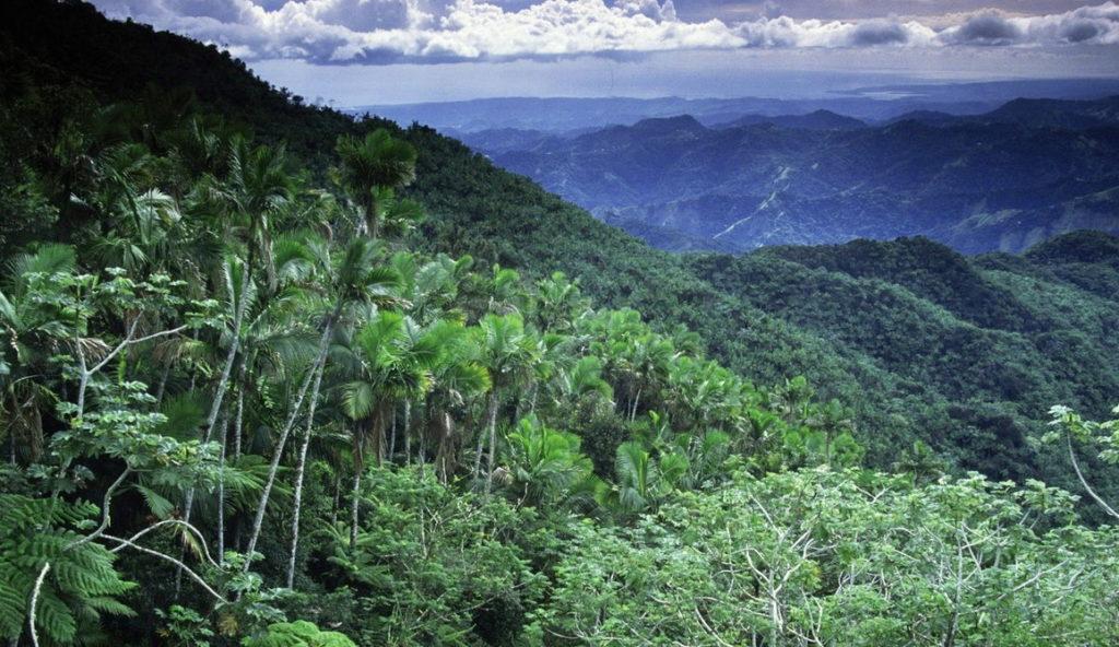 Территория с экваториальным климатом