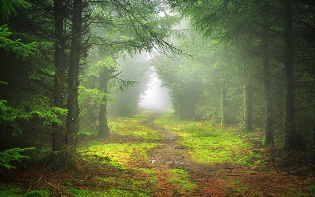 Тепло, туман и кратковременные грозы - идеальные условия для грибов