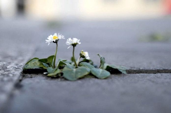 Ученые установили, что в последнее время растения стали вымирать намного быстрее