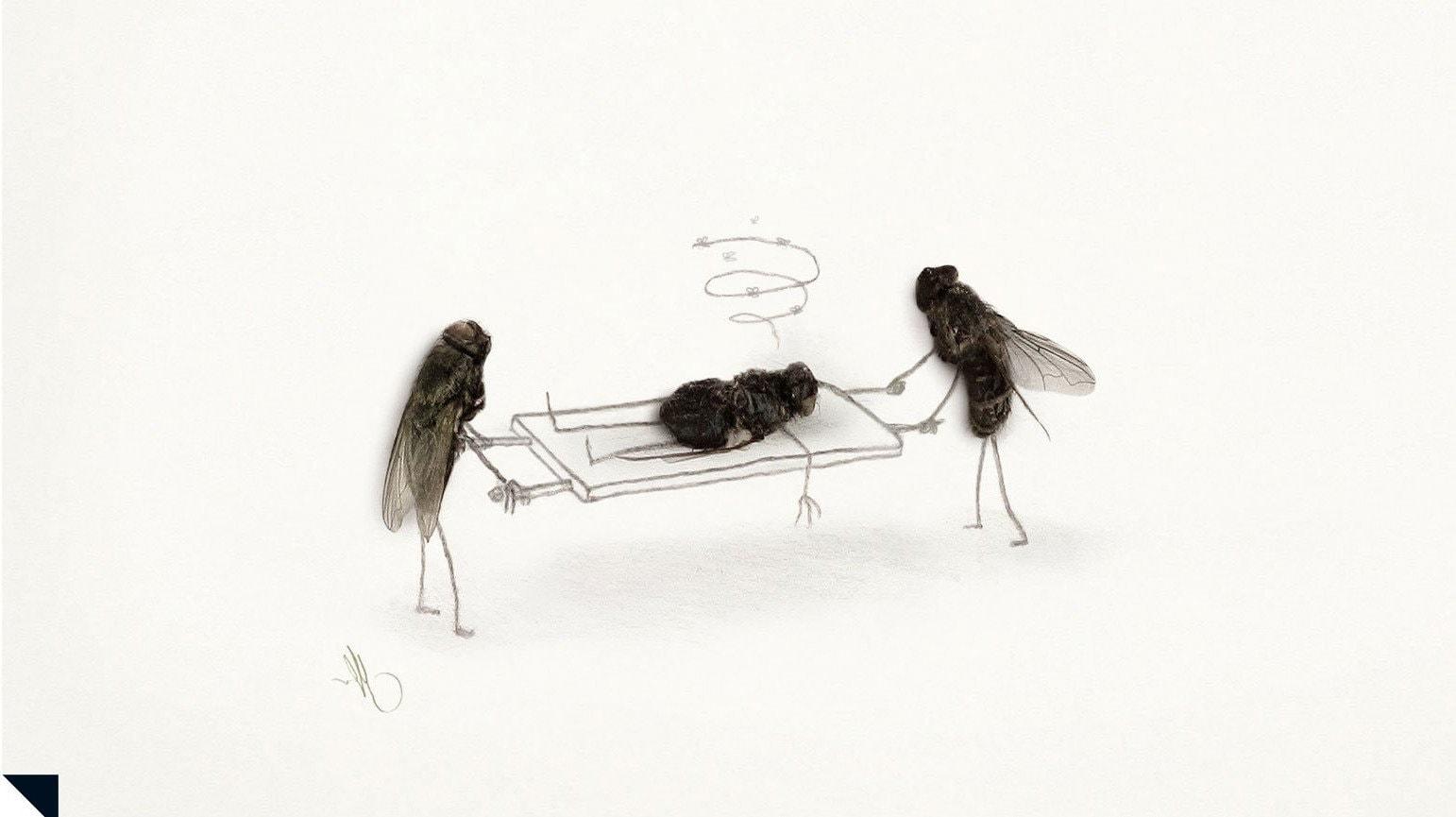 Картинка мухи прикольное, открытка марта