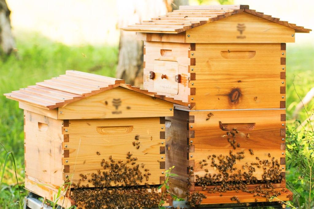 Деревянные улья для пчел