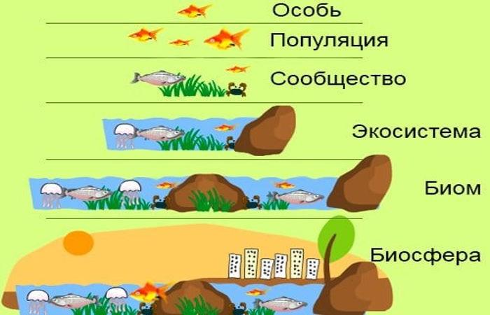 Уровни экосистемы