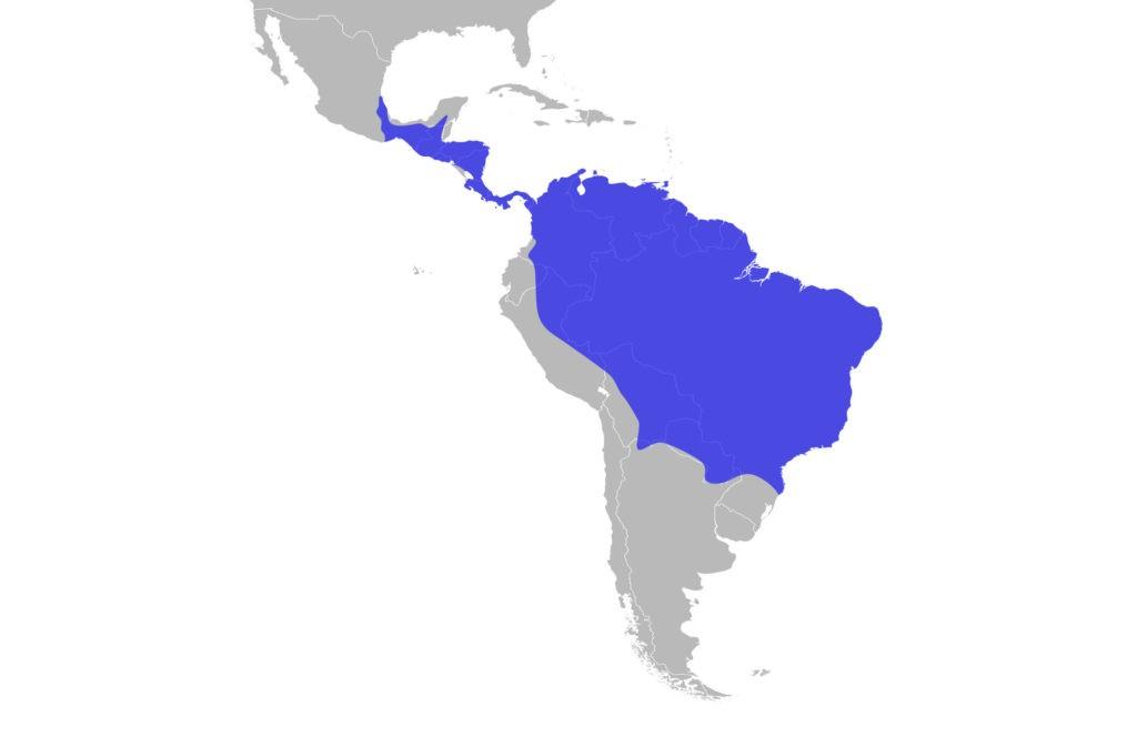 Ареал, где живет южноамериканская гарпия