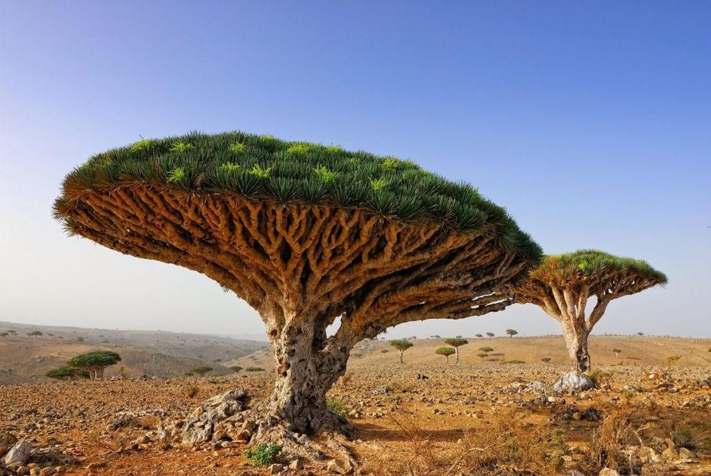 Южное растение