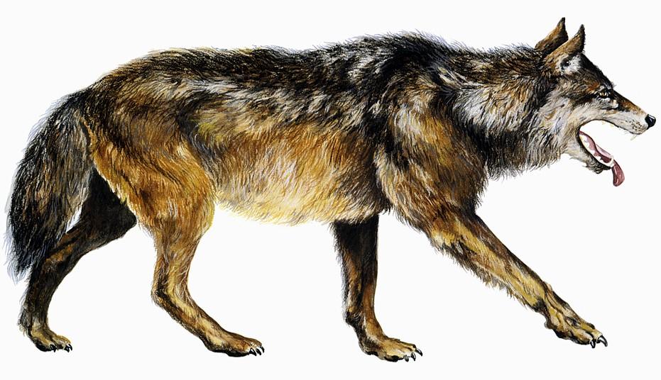 Древний ужасный волк