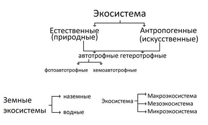 Виды экосистем