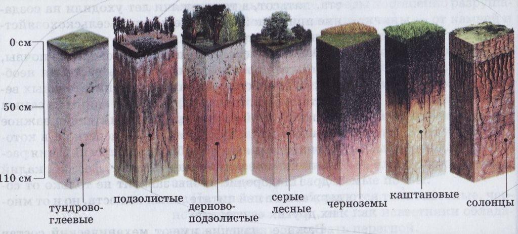 Виды почв и их внешний вид