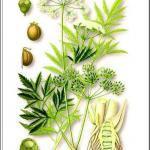 Опасные растения России