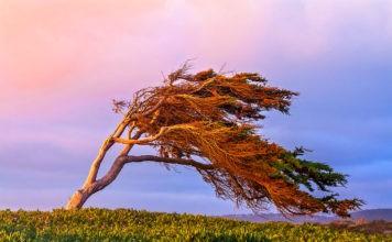 Ветер: что это такое, как образуется, виды, сила ветра, фото и видео