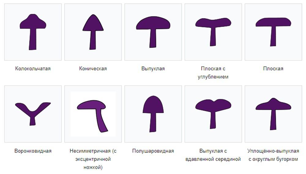 Формы шляпок