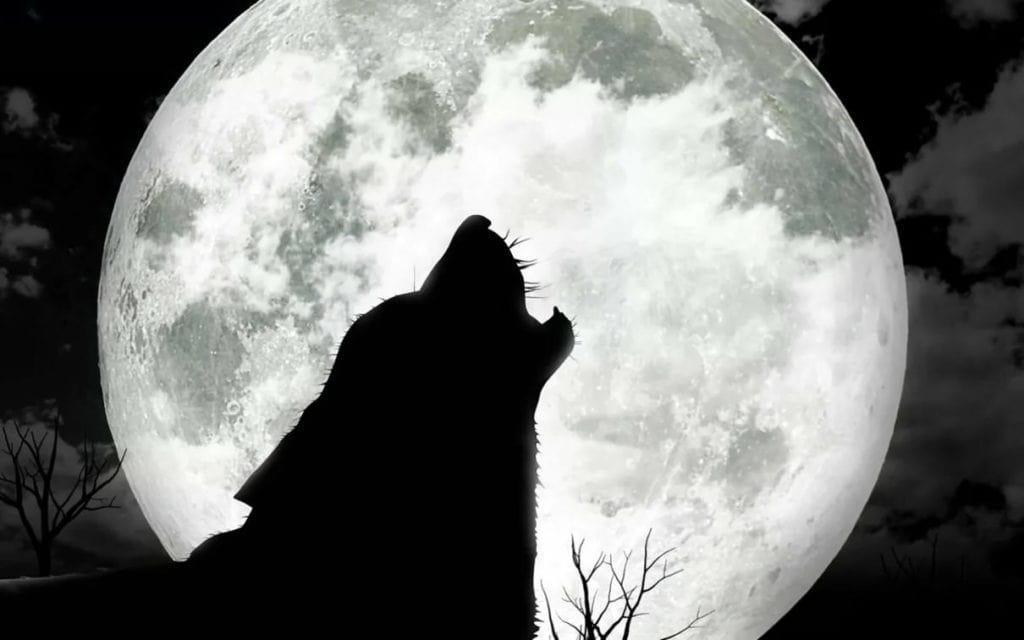 Волки воют в полнолуние