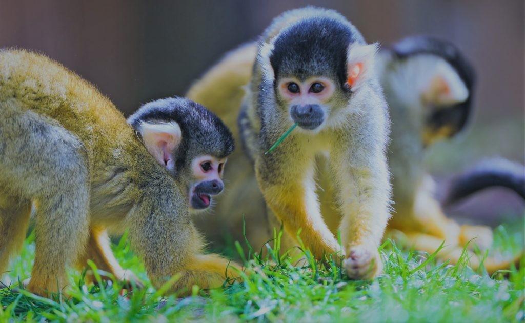 Виды обезьян обладают самыми разными внешностью, размером и весом.