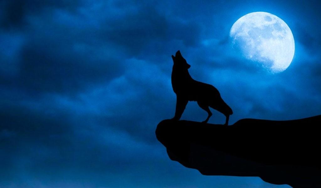 Волк, воющий на луну - популярный образ