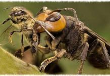 Враги пчел