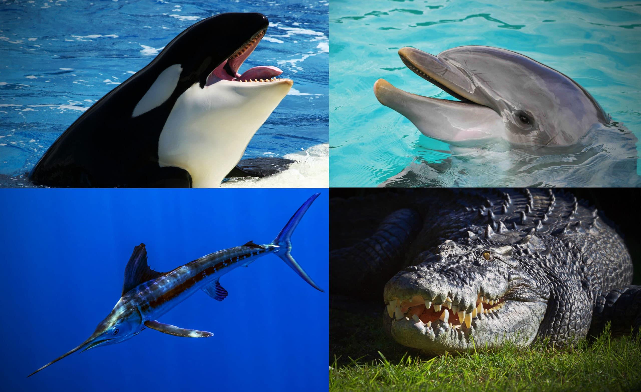 Естественные враги акулы