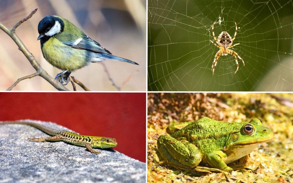 Естественные враги комаров