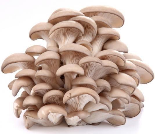 Самые популярные условно съедобные грибы