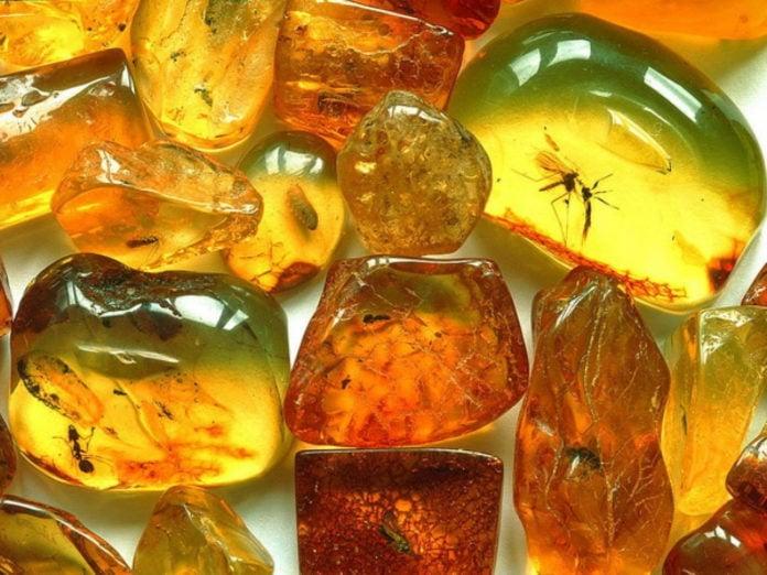 Янтарь - ископаемая смола