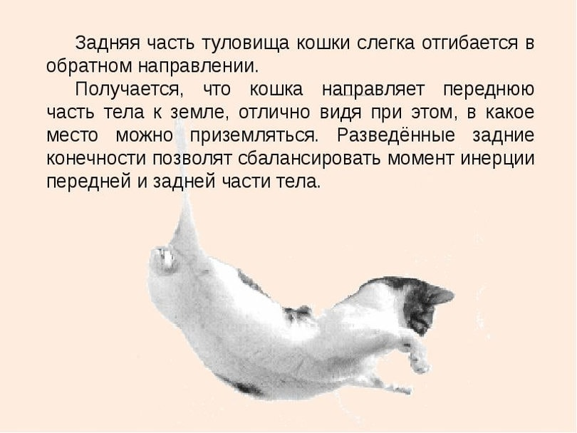 Середина падения кошки