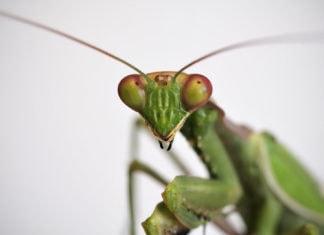 Загадочные насекомые