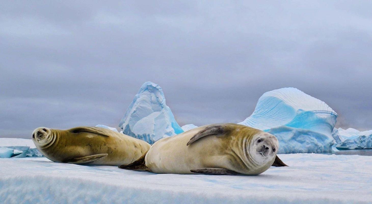 Какие животные обитают в Антарктиде - виды, названия, описание и фото