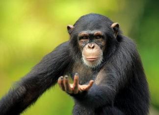 Животные-интеллектуалы