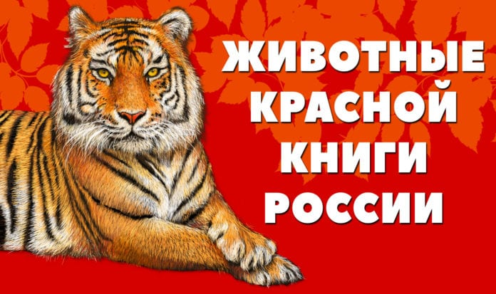 Животные Красной книги России - названия, описание, характеристика, редкие виды, фото и видео