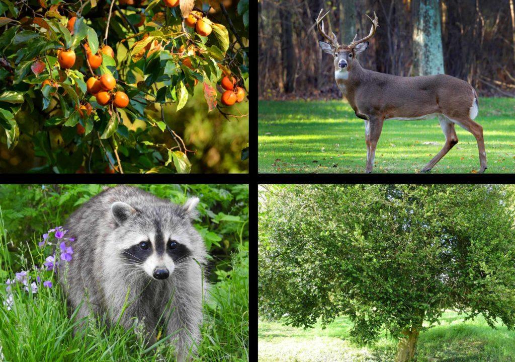 Животные и растения субтропиков