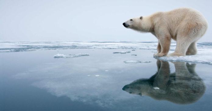 Животные не успевают адаптироваться к изменению климата