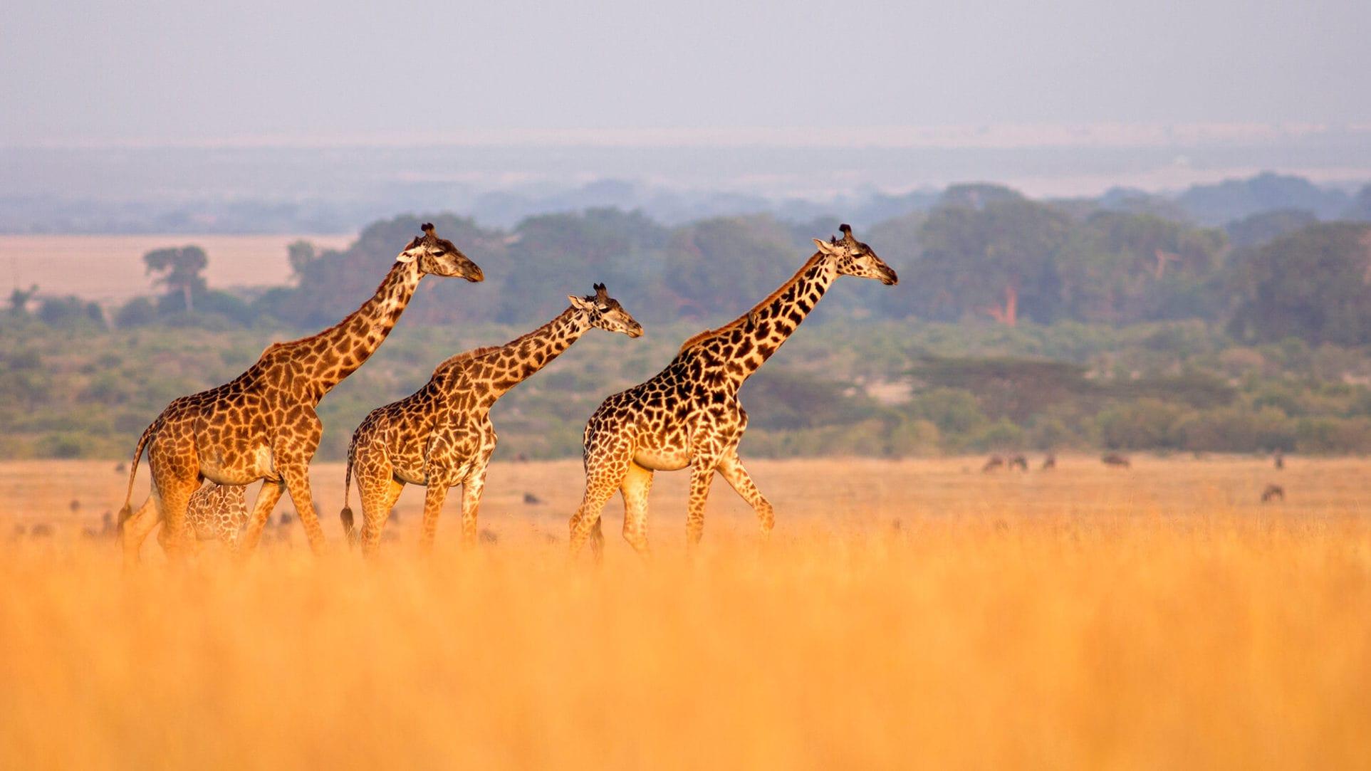 Какие животные обитают в Африке - список, фото и описание
