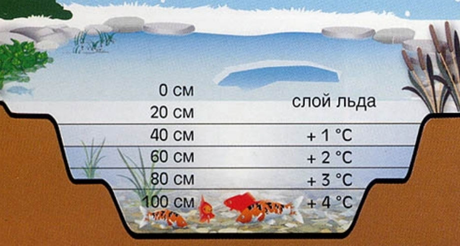 Зимовальная яма рыб